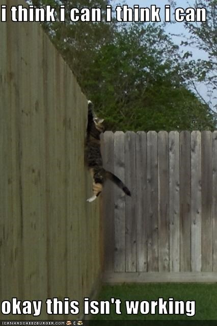 climbing fence oh noes