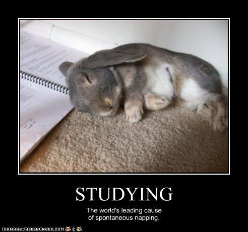 cute homework lolbuns nap studying - 2641783808
