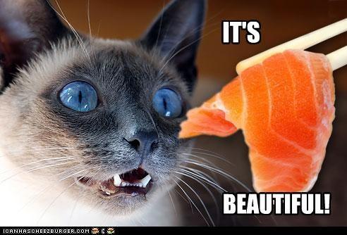 fud,sushi,want