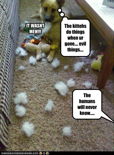 IT WASNT MEH!!! The kittehs do things when ur gone.... evil things.... The humans will never know.....