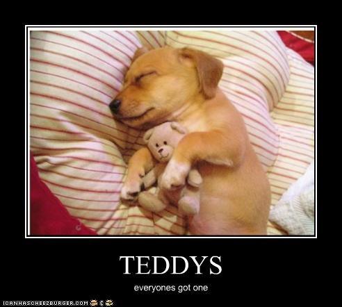 puppy sleeping stuffed animal teddy bear whatbreed - 2643218176