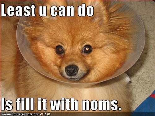 cone food head nom pomeranian