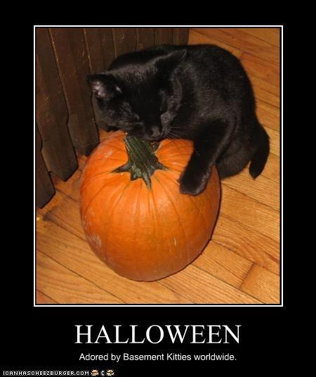 basement cat halloween love meowloween pumpkins - 2644699904