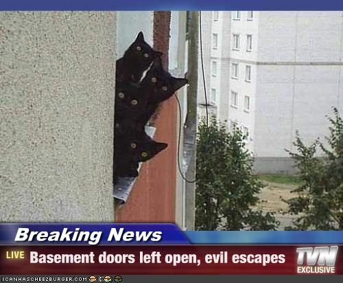 basement cat evil news - 2644985088