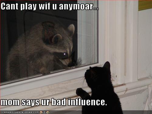 evil,lolraccoons,momcat,play