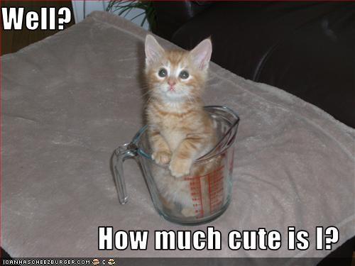cup,cute,kitten