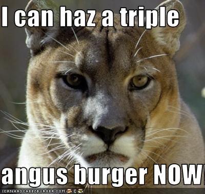 Cheezburger Image 2645465600
