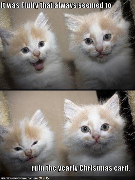 annoying cute kitten - 2645915136