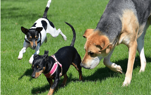 a picture of three dogs running freely in green grass - cover for a story about two women using economic algorithms to find dogs forever home.