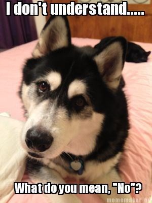Confused Dog Memes - Dog Memes of a husky looking a bit confused about why his owner said no