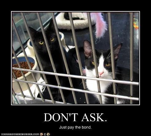 halp jail - 2649126912
