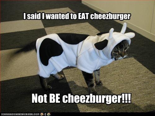 Cheezburger Image 2649726208