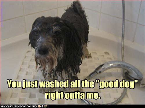 "it's down the drain You just washed all the ""good dog"" right outta me. is a WinnieWonka thing"