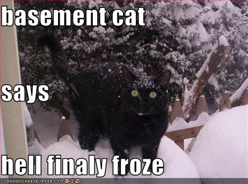 basement cat,cold,hell,LOLs To Go,snow