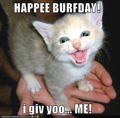 birthday cute kitten present - 2652787200