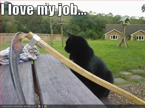 basement cat,evil,happy,work
