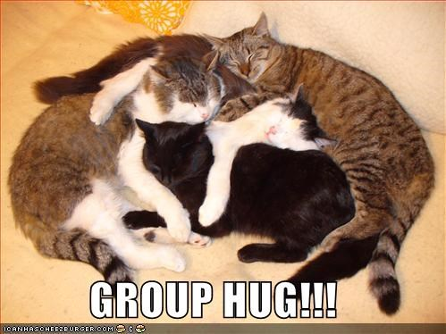 Image result for group of cats meme