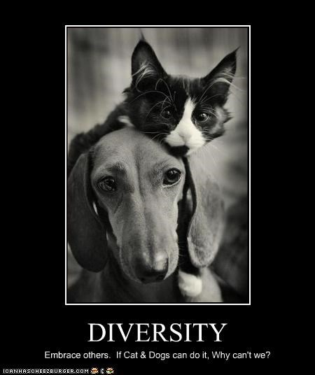 DIVERSITY Embrace others. If Cat & Dogs can do it, Why can't we?