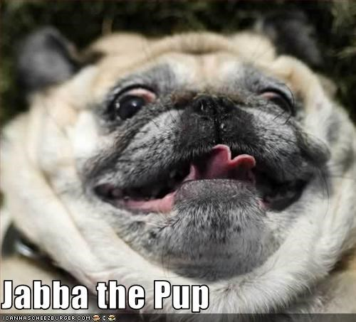 fat jabba the hutt obese pug star wars - 2656110336