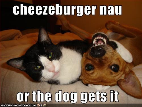 Cheezburger Image 2657313024
