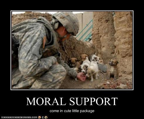 puppies soldiers support war