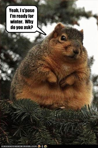fat lolsquirrels snow - 2657732096