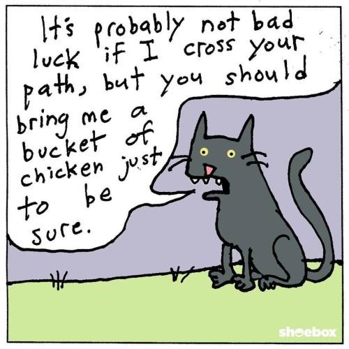 12 superstitions about animals