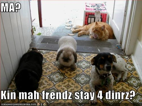 bunny,dinner,friends,lolcats,mom,rat terrier,stay