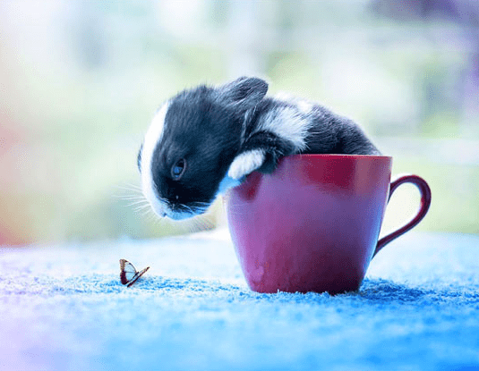 a picture of an adorable small baby rabbit in the hands of a person - cover phto for a list on facts and the first days of a rabbits life