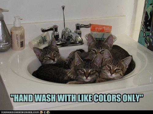 cute kitten sink