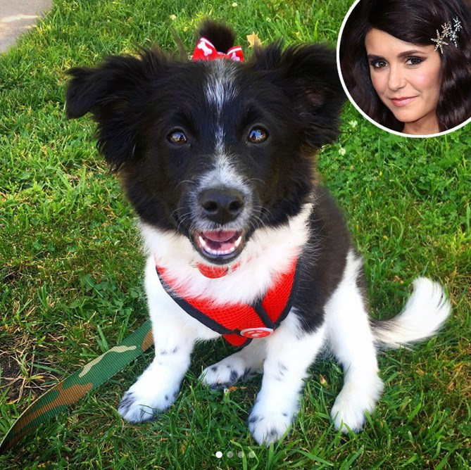 a picture of an adorable dog with a bow looking high up when taken a picture- a cover for celebrities that have adopted in 2017