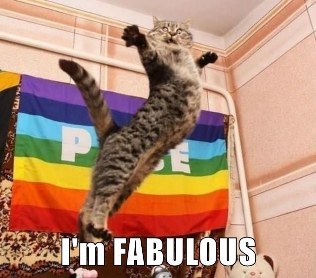 a cat in the jump in mid air looking fabulous and saying he is fabulous - cover for a list of the best and highest voted cat memes that users of cheezburger and lolcas have submitted this week