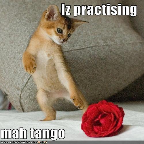 cute,dancing,kitten,tango