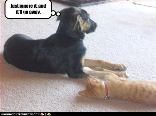 away,german shepherd,ignore,lolcats