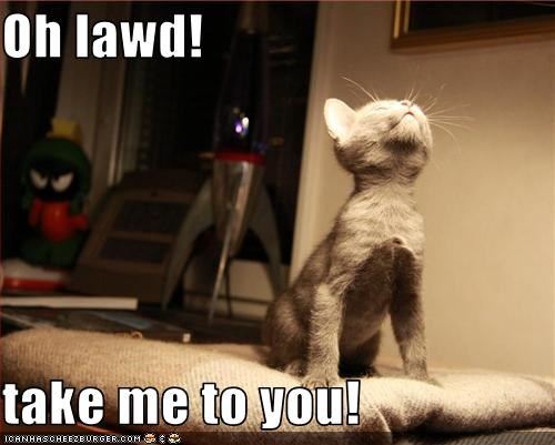 Oh Lawd Take Me To You Cheezburger Funny Memes Funny Pictures