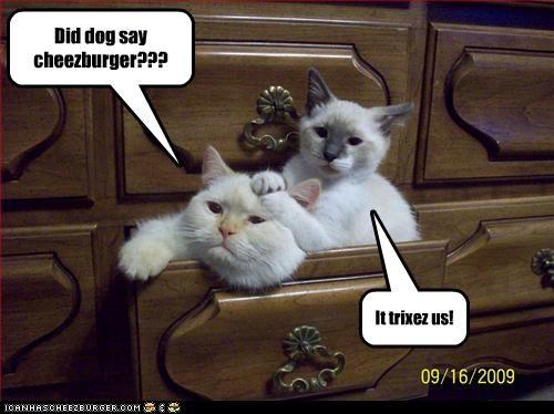 Did dog say cheezburger??? It trixez us!