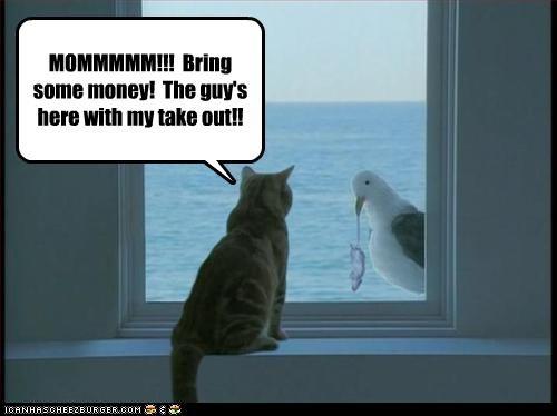 fud lolbirds money want - 2664489728