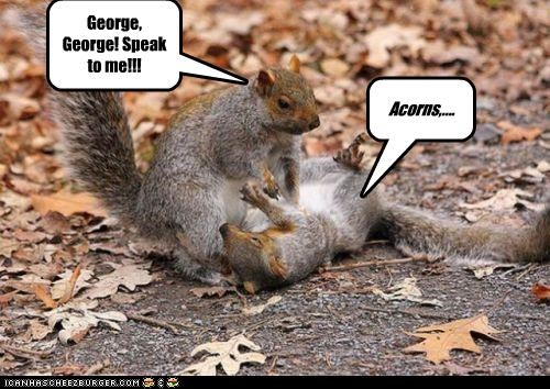 George, George! Speak to me!!! Acorns,....