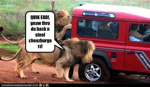 Cheezburger Image 2667467008