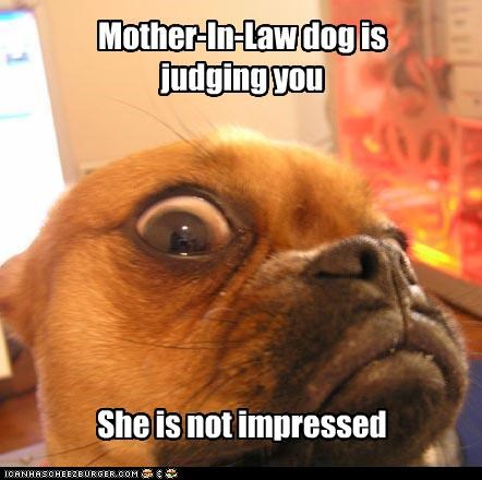 Mother-In-Law dog is judging you She is not impressed