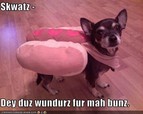 Cheezburger Image 2668981248