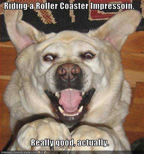 impression,labrador,mouth,open,pretty good actually,roller coaster