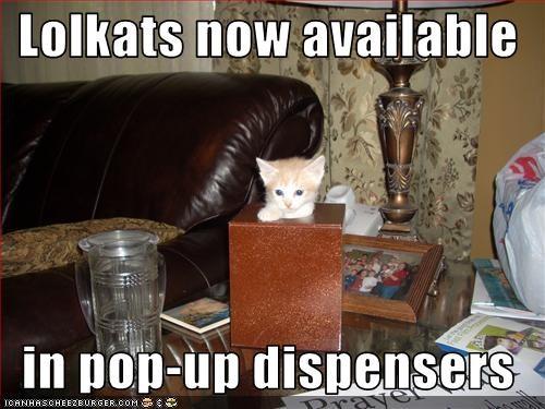 cute kitten pop up tissues - 2670889728