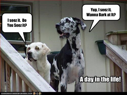 bark day great dane labrador life see typical