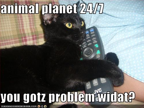 animal planet 24/7  you gotz problem widat?