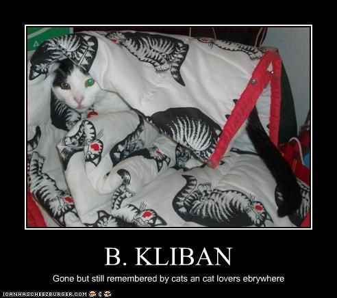 B. KLIBAN Gone but still remembered by cats an cat lovers ebrywhere