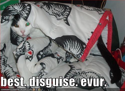 blanket disguise plotting - 2672525312