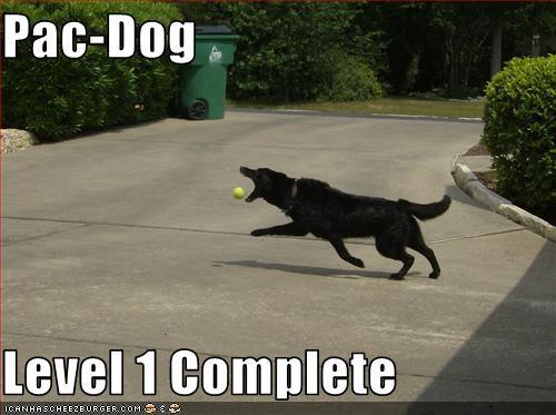 balls bite complete labrador pac man video games - 2674518528