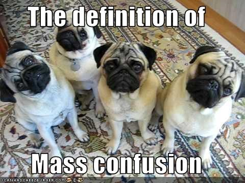 confused,definition,group,head tilt,pug