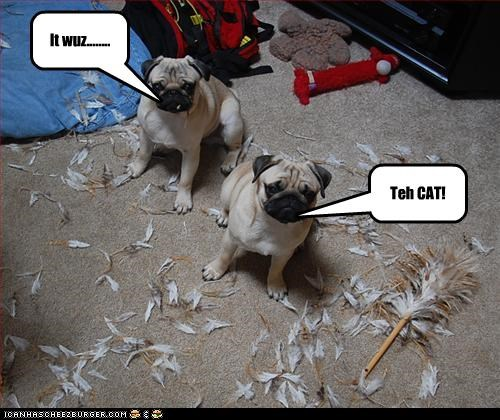 It wuz........ Teh CAT!